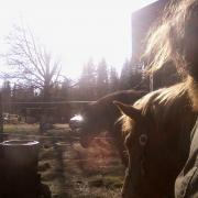 springtime radiance with my horses