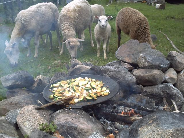 Sheep, a fire and food being prepared