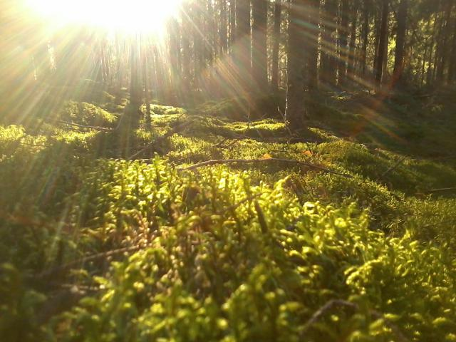 I love the color of moss in the evening sunlight