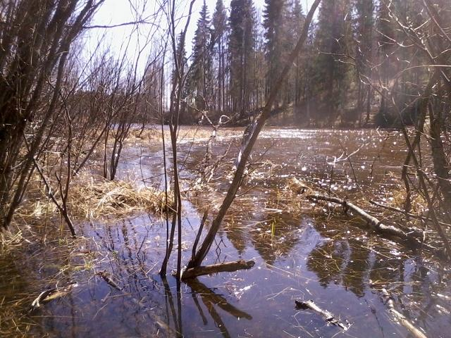 shallow water with a lot of foliage is ideal for pike spawning