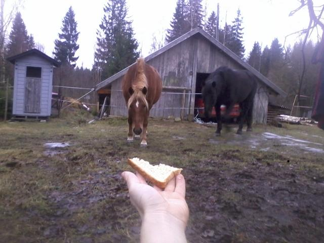 Offering a piece of dry bread