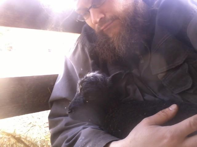 a newborn sheep