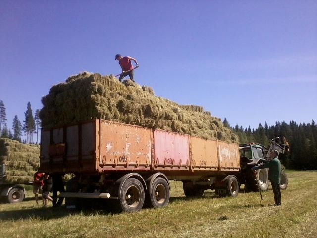 he is stacking the bales
