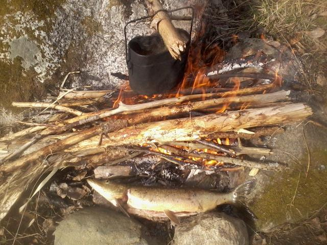 Coffee being cooked, a pike being roasted