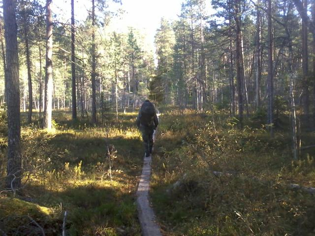 Crossing a pine mire